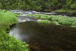 Spring Green along Contoocook River, Peterborough, NH