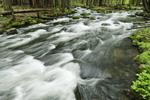 Nubanusit Brook in Spring Freshet, Harrisville, NH