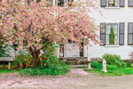 Flowering Peach Tree and Old Colonial Home, Athol, MA