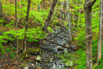 Brook and Forest in Spring, Delaware Water Gap National Recreation Area, Pike County, Dingmans Ferry, PA