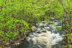Tully River in Spring Freshet, Athol, MA