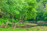 Trees in Spring along Shoreline of Caney Fork River, Smith County,  near Buffalo Valley, TN