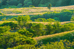 Evening Light on Trees and Meadows in Rodman's Hollow, View from Overlook on Short Loop Trail, Town of New Shoreham, Block Island, RI