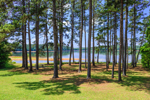 West Point Lake Viewed through Pine Trees at Sunny Point Park, Chattahoochee River, Troup County, LaGrange, GA