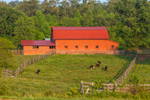 Red Barn with Cows in Pasture in Early Morning Light, Towns County, near Macedonia, GA