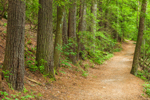 Trail through Forest to Dukes Creek Falls, Chattahoochee Wildlife Management Area and Chattahoochee National Forest, White County, GA