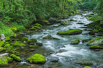 Moss-covered Boulders and Small Rapids in Straight Fork, Great Smoky Mountains National Park, NC