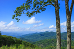 View of Great Smoky Mountains through Tree Tops at Overlook on Newfound Gap Road, Great Smoky Mountains National Park, NC