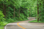 Newfound Gap Road Winding through Forest, Great Smoky Mountains National Park, TN