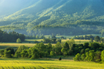 Early Morning Light Shines on Mountains and Fields at Cades Cove, Great Smoky Mountains National Park, TN