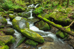 Series of Small Waterfalls on Roaring Fork Creek, Roaring Fork Motor Nature Trail, Great Smoky Mountains National Park, TN
