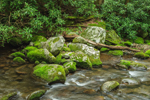 Moss and Lichen-Covered Boulders in Roaring Fork Creek, Roaring Fork Motor Nature Trail, Great Smoky Mountains, TN