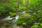 Small Cascades in Roaring Fork Creek, Roaring Fork Motor Nature Trail, Great Smoky Mountains National Park, TN