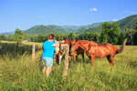Park Visitors with Horses in Early Evening, Caves Cove, Great Smoky Mountains National Park, TN