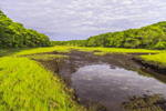 Salt Marsh on Naushon Island, Elizabeth Islands, Town of Gosnold, MA
