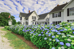 Old Town Inn With Row of Hydrangeas in Front, Town of New Shoreham, Block Island, RI