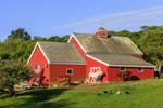 Red Barn, Horses, and Burro in Early Morning Light, Beacon Hollow Farm, Town of New Shoreham, Block Island, RI