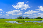 Sapowet Creek and Salt Marsh, Sapowet Wildlife Management Area, Tiverton, RI