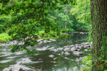 Summer along the Millers River, Bearsden Conservation Area, Athol, MA