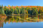 Androscoggin River in Fall along 13 Mile Woods Drive, Great North Woods, Errol, NH