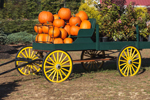 Green Wagon with Yellow Wheels Full of Pumpkins and Plants, New Hampton, NH