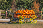 Wagon Full of Pumpkins and Mums, New Hampton, NH