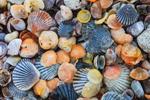 Close Up of Colorful Seashells on Beach, Shelter Island Sound, Shelter Island, NY