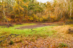 Dry Conditions in Ephemeral Pond Bordered by Deciduous Forest in Fall, Sturbridge, MA