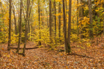 Old Woods Road through Deciduous Forest, Sturbridge in Fall, MA