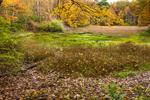 Wet Meadow Bordered by Deciduous Forest in Fall, Sturbridge, MA