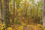 View from Top of Esker Looking Down into Deciduous Forest in Fall, Sturbridge, MA