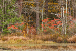 Woodlands and Wetlands in Fall at Fish Pond, Sturbridge, MA
