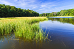 Salt Marshes along Long Creek near Mattituck Inlet, off Long Island Sound, Village of Mattituck, Southold, NY