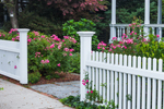 White Fences and Pink Roses at Thomas Mallard House, Built 1805, Essex, CT