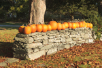 Pumpkins on Old Stone Wall at Walker's Roadside Stand, Little Compton, RI