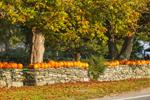 Pumpkins on Old Stone Walls at Walker's Roadside Stand, Little Compton, RI