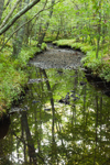 Dundery Brook at Low Water in Wilbour Woods, Little Compton, RI