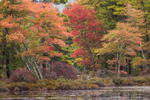 Early Fall Foliage on Small Island in Harvard Pond, Petersham, MA