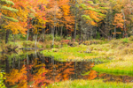 Colorful Foliage along Lawrence Brook in Early Autumn, Royalston, MA