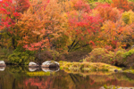 Brilliant Fall Foliage in Red Maples along Millers River in Fall, Royalston, MA