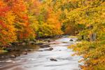 Brilliant Fall Foliage along Millers River, Royalston, MA