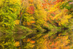 Brilliant Fall Colors Reflecting in Millers River, Royalston, MA