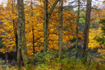 Fall Foliage along Millers River near Bearsden Conservation Area, Athol, MA