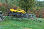 Old Horse-drawn Wagon with Flowers near Stone Wall in Early Fall, Royalston, MA