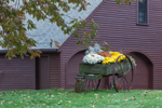 Old Wooden Wagon Filled with Flowers in Front of Country Home, Royalston, MA