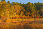 Colorful Fall Woodlands in Early Morning Light Reflecting in Little Cliff Pond, Nickerson State Park, Cape Cod, Brewster, MA