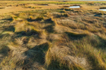 Salt Marsh Grasses near Lieutenant Island, Wellfleet Bay Wildlife Sanctuary, Cape Cod, Wellfleet, MA