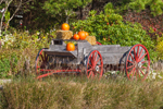 Old Wooden Wagon with Pumpkins and Haybales in Fall, Cape Cod, Eastham, MA
