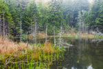 Marsh and Small Beaver Pond in Fog off Sand Beach in Fall, Acadia National Park, Mt Desert Island, Bar Harbor, ME