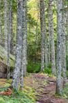 Valley Trail on Beech Mountain, Acadia National Park, Mt Desert Island, Southwest Harbor, ME